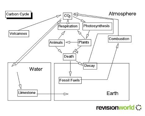 Carbon cycle lessons pinterest cycling gcse revision and gcse carbon the carbon cycle and nitrogen cycle ccuart Images