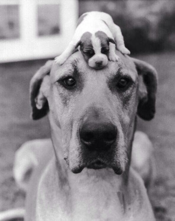 Big dog, little pup