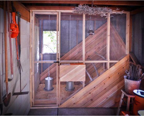 Indoor Chicken Coop Chicken Coop Designs Backyard Chicken Coops Chickens Backyard