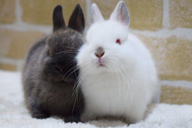 ラビッツブログ Rabbits ラビッツ うさぎブリーダー専門店 大阪 うさぎ ラビッツ ウサギ