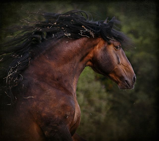 Crazy Horse by Marndi on DeviantArt