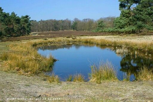 Little Lake at the Veluwe in the Netherlands.