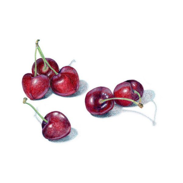 Bing Cherries Archival print of colored pencil drawing food art... ($15) ❤ liked on Polyvore featuring home, home decor, wall art e unframed wall art