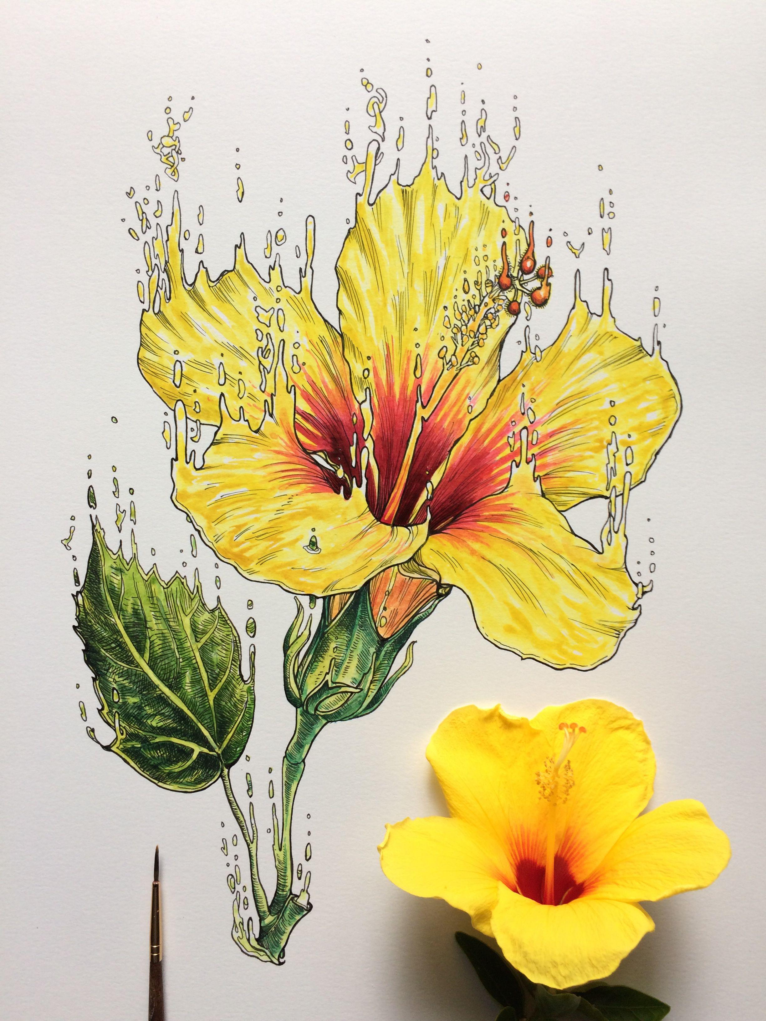 Ink Watercolor Hibiscus Noel Badges Pugh Nature Art Drawings