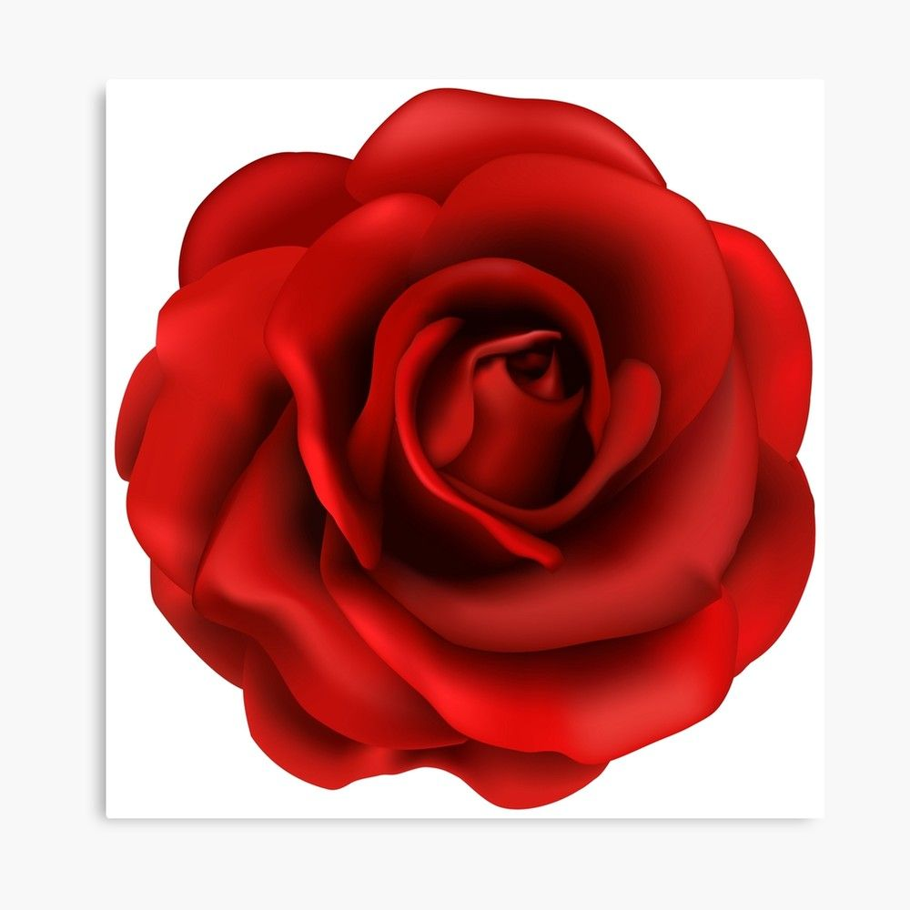 Rose Love Canvas Print By Wealthyro9 Rose Flower Png Red Rose Flower Rose Flower