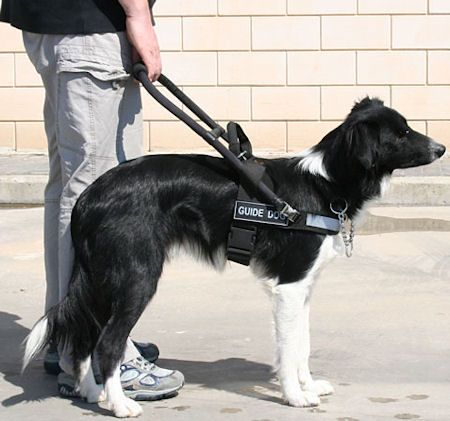 b5d1548bdef37849bf85d3ee57a8a5e6 lightweight nylon mobility harness www dog harness store com