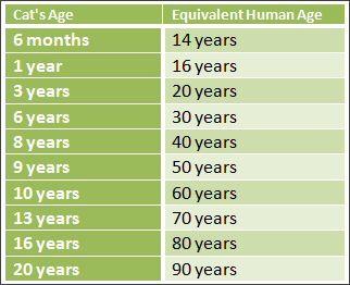 Cats Age In Human Years Yahoo