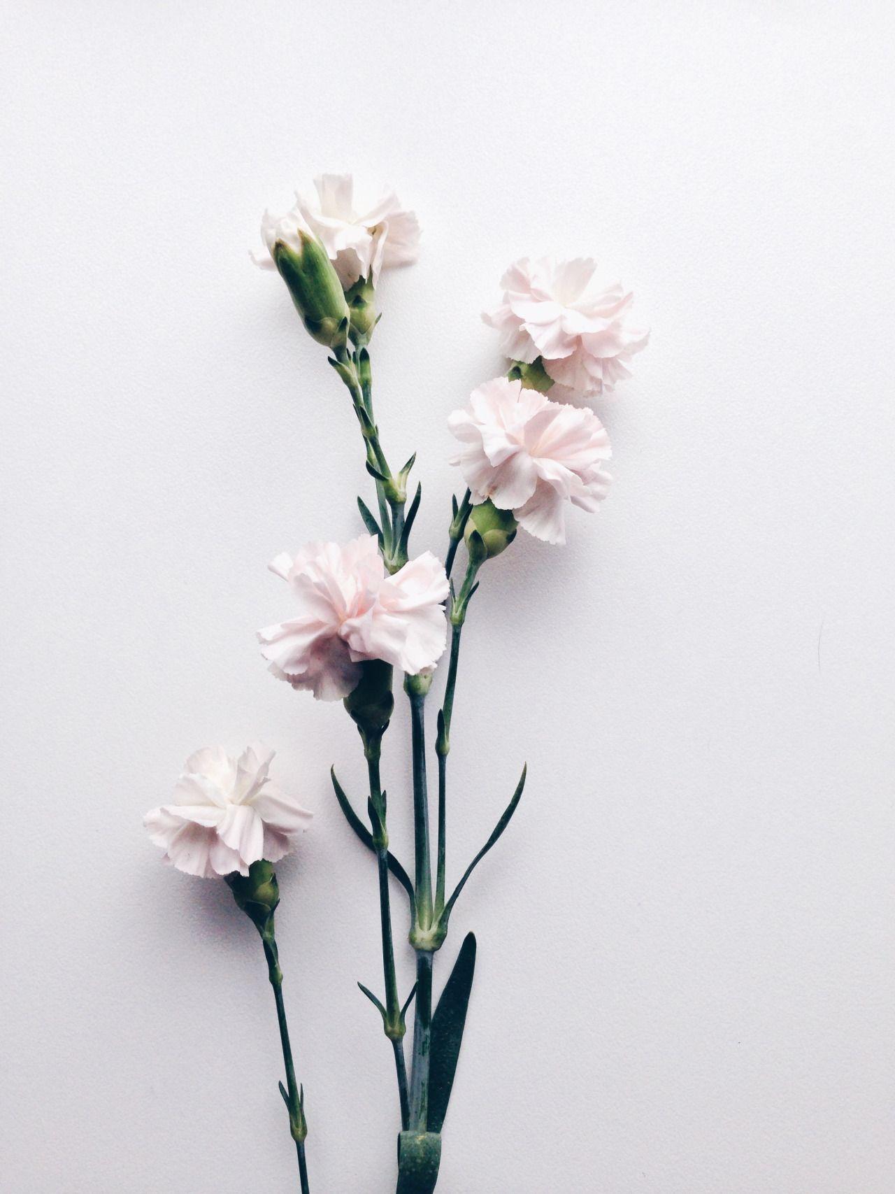 clavells deco pinterest fleurs belles fleurs et fleurs bleues. Black Bedroom Furniture Sets. Home Design Ideas
