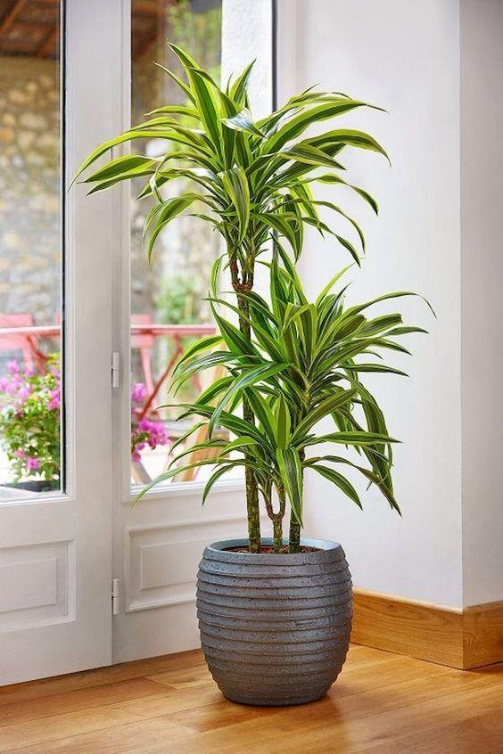 Photo of Spider Plant