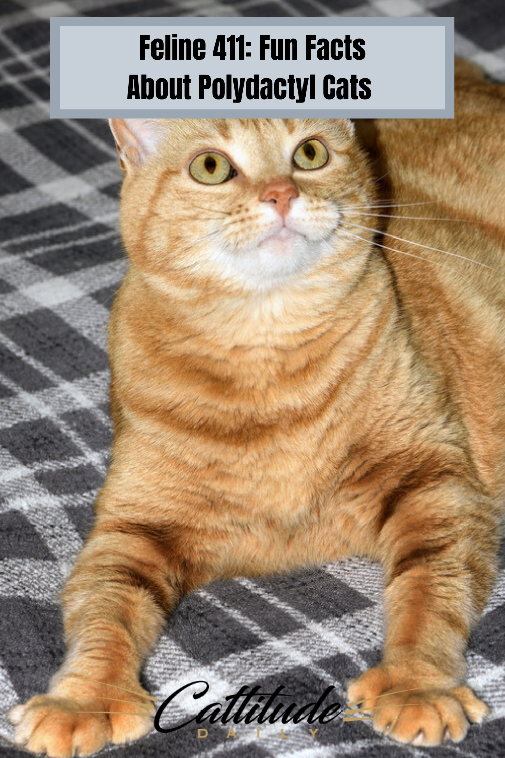 Are you a lover of polydactyl cats? Learn more about them