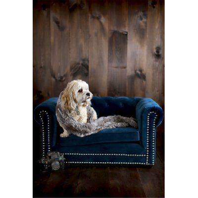 Archie Amp Oscar Darlene Dog Sofa Cool Dog Beds Couch Pet
