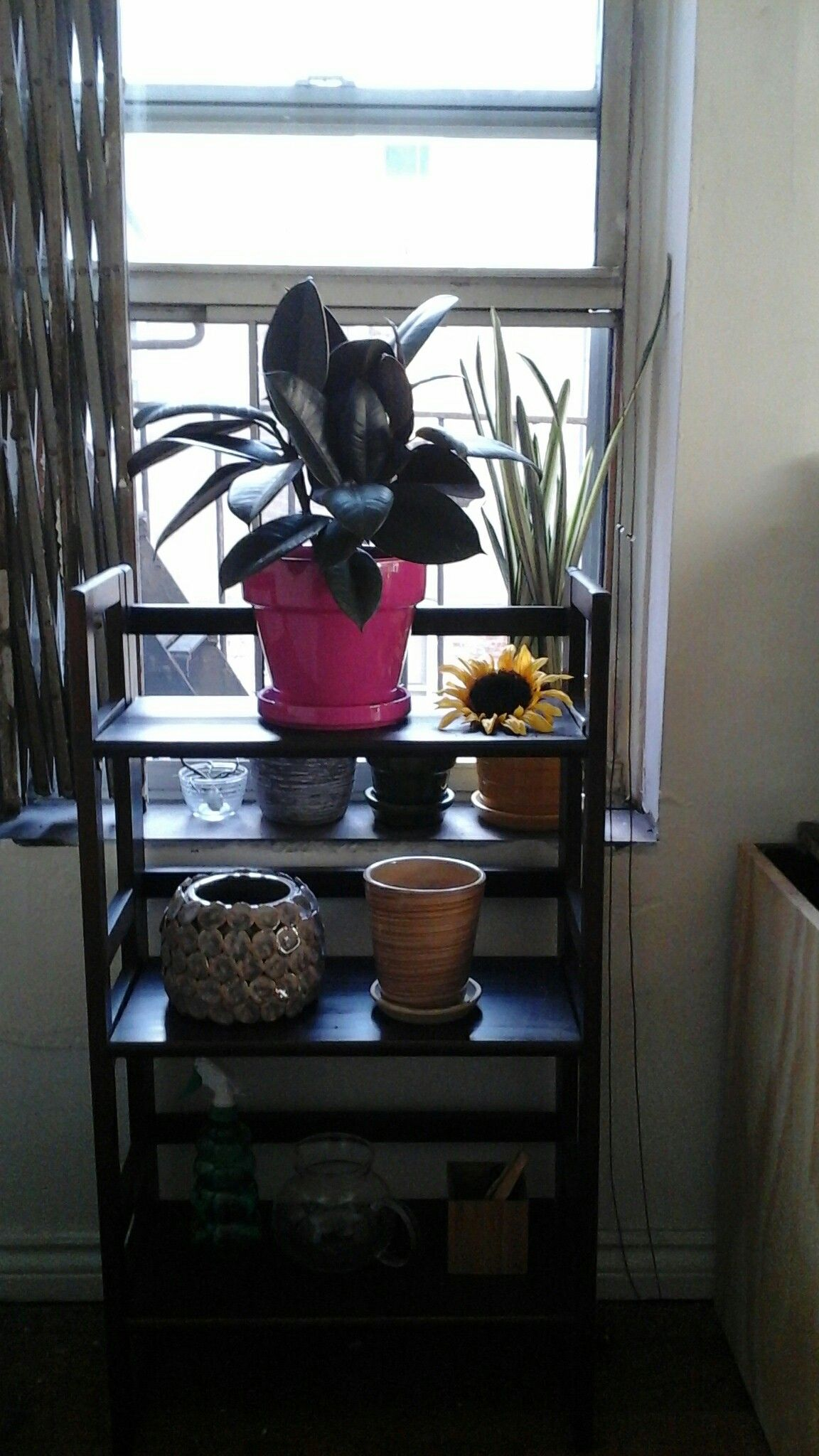 Small Apartment Living #Plantlife Added A Rubber Plant To My