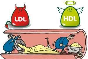 que es colesterol hdl y ldl