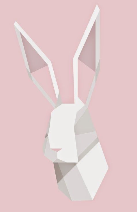facet rabbit nate xopher