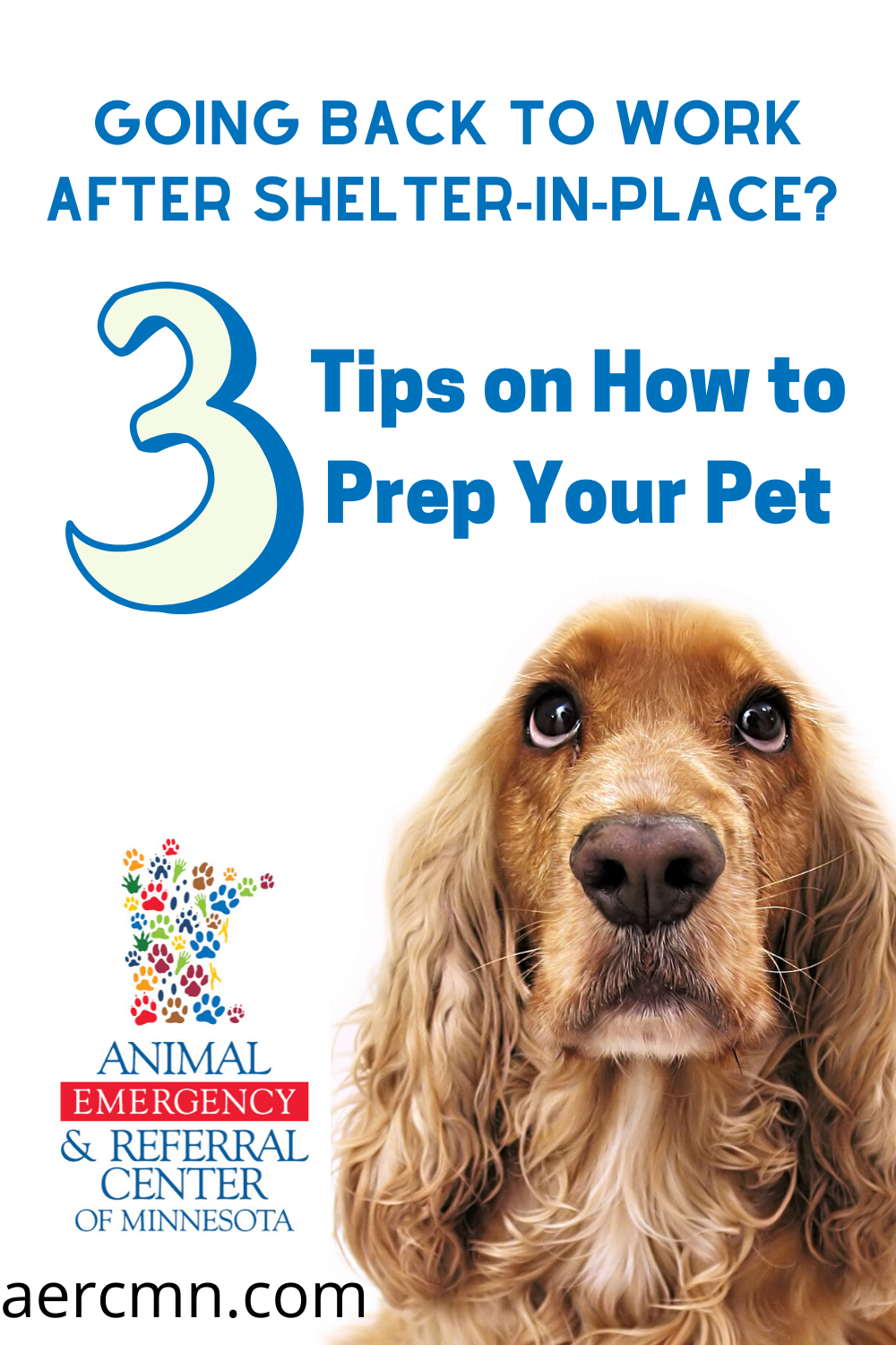 Going Back To Work After Shelter In Place 3 Tips On How To Prep Your Pet In 2020 Your Pet Pets City Pets