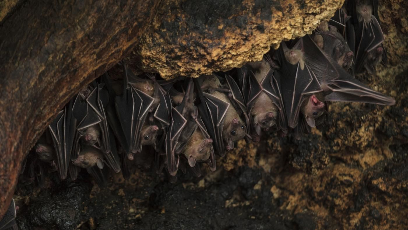 Image result for drawings and paintings of bats folded into the shadows of rafters