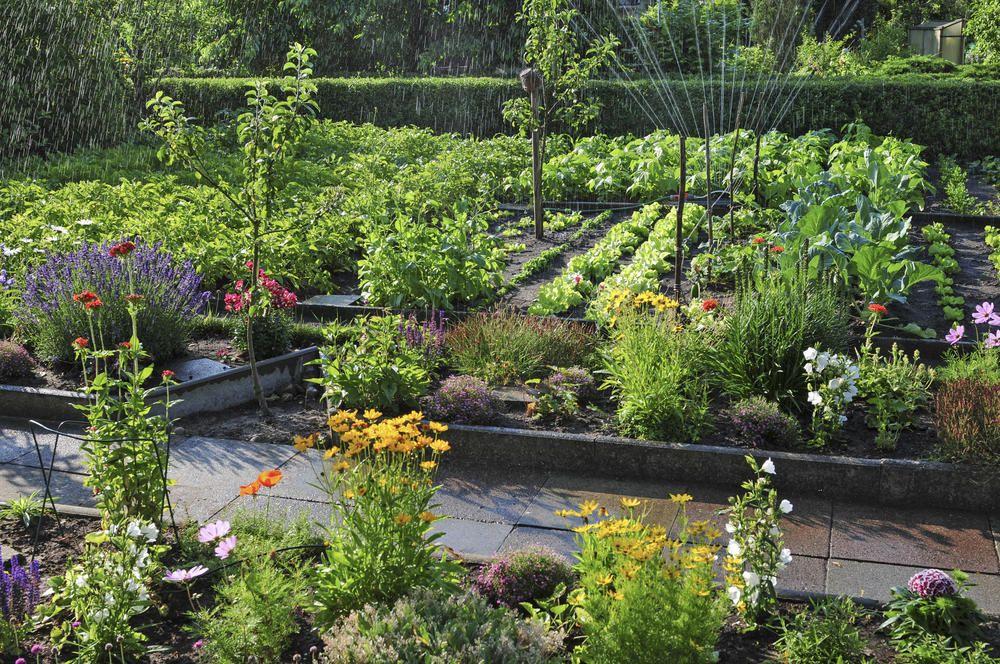 Schrebergarten, Kleingarten | Urban Gardening | Garden ...