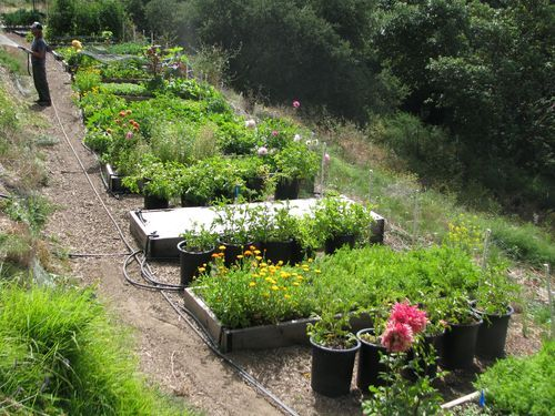 Love Apple Farms: Great Resource For Learning About Gardening!