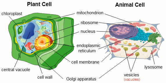 Cell Structure and Organization - Biology Keystone Exam ...