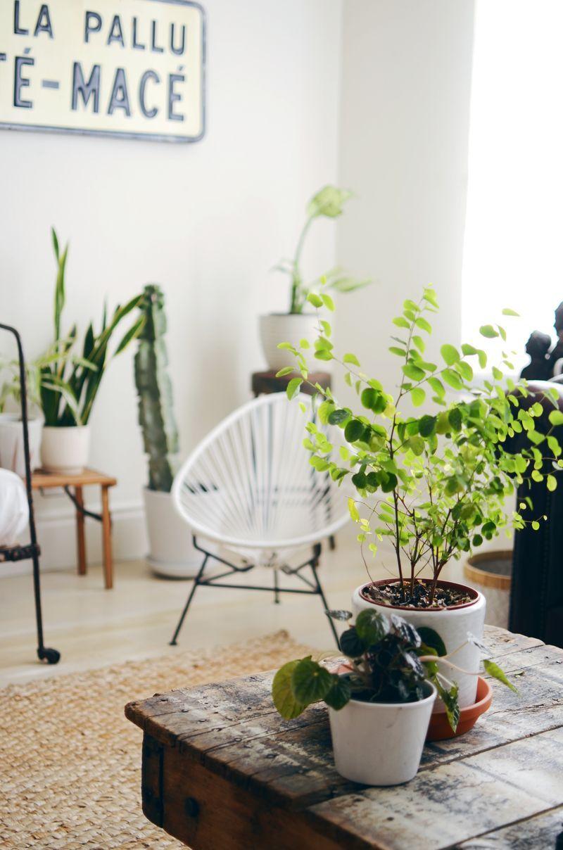 Plantas ficam ótimas quando o assunto é decoração. O ambiente fica mais leve e tranquilo.