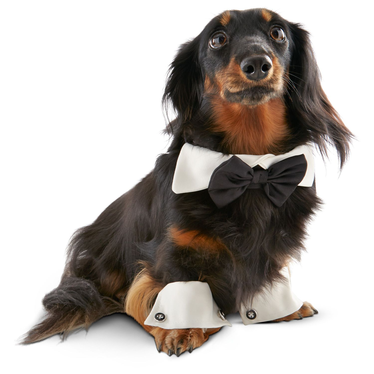 our petco special occasions dog tuxedo collar u0026 cuffs set is an