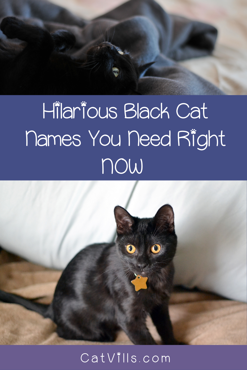 20 Absolutely Adorable Hilarious Black Cat Names Catvills In 2020 Cat Names Cute Black Cats Cats