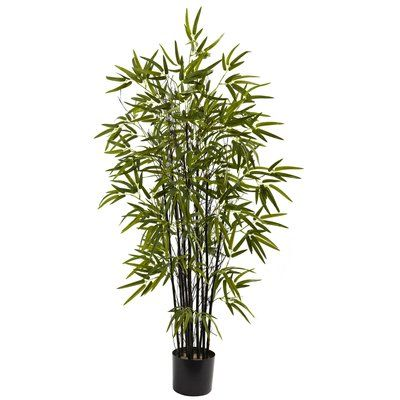 Bungalow Rose Black Bamboo Tree In Pot Size 48 H X 29 W