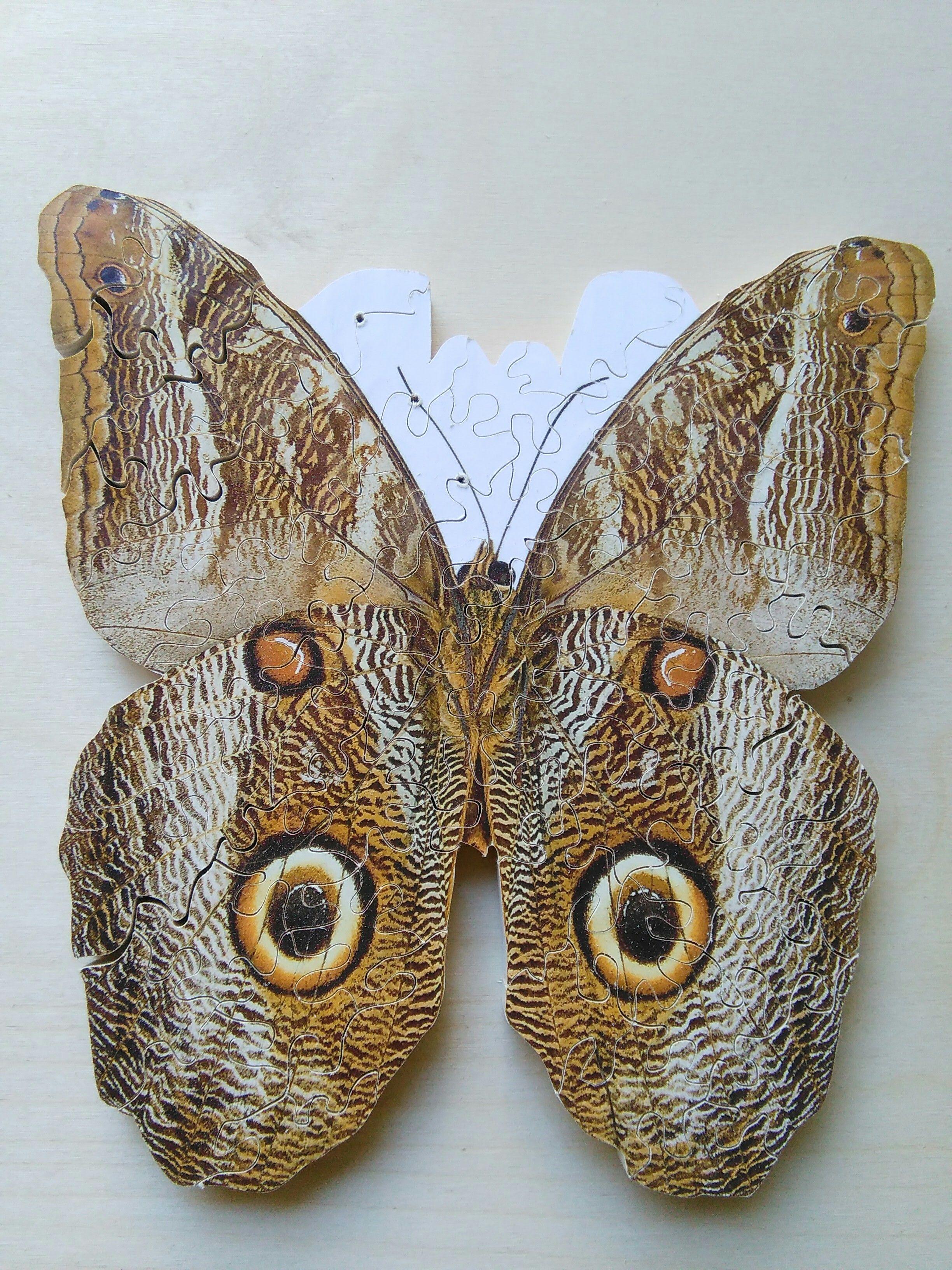 puzzle: farfalla. Circa 85 pezzi | artedeltraforo vicenza: my ...