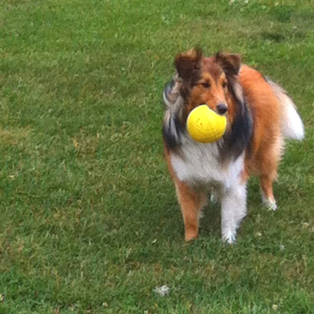 Playing with my ball