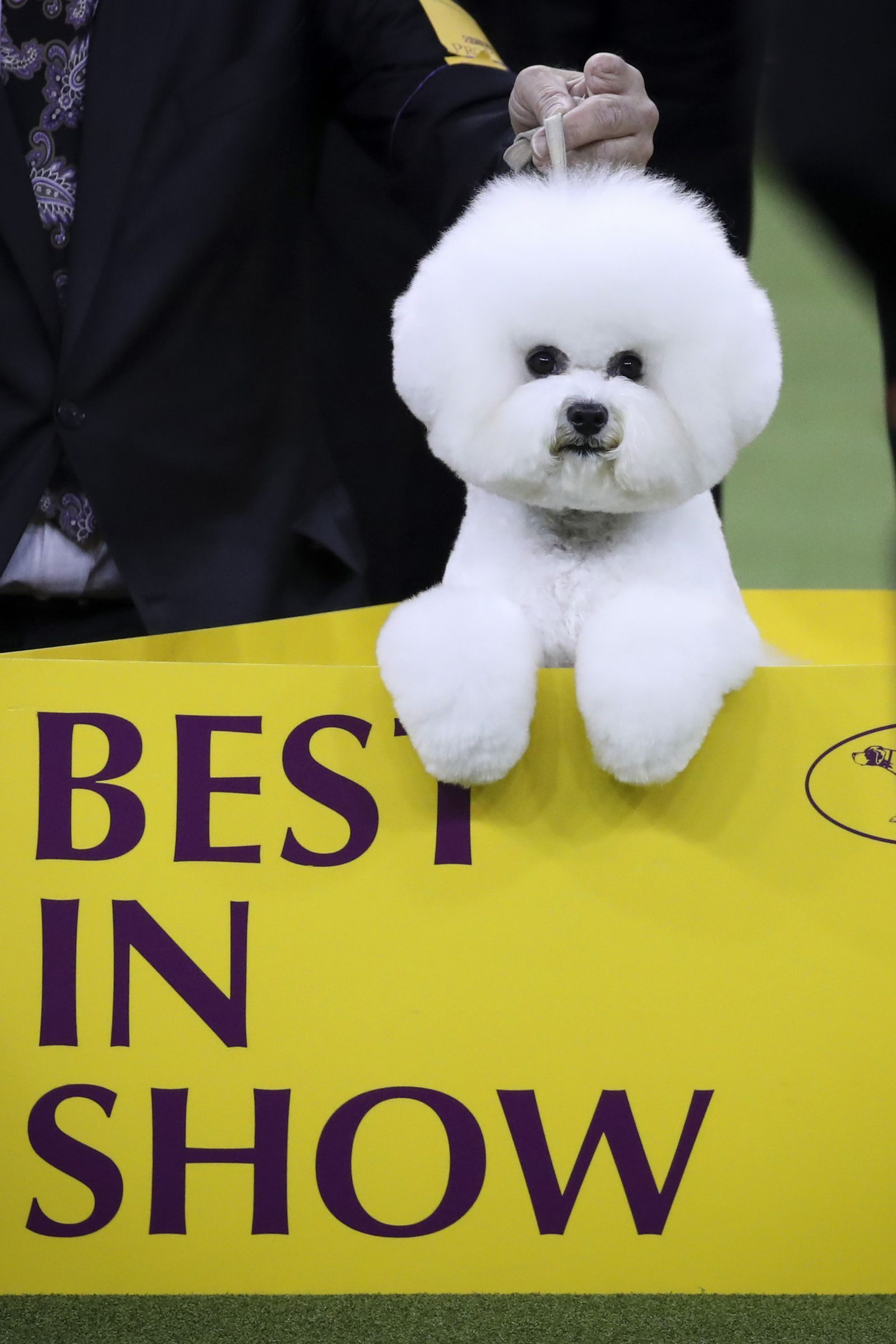 31 Cute Pictures Of All Star Dogs Just In Case You Needed A