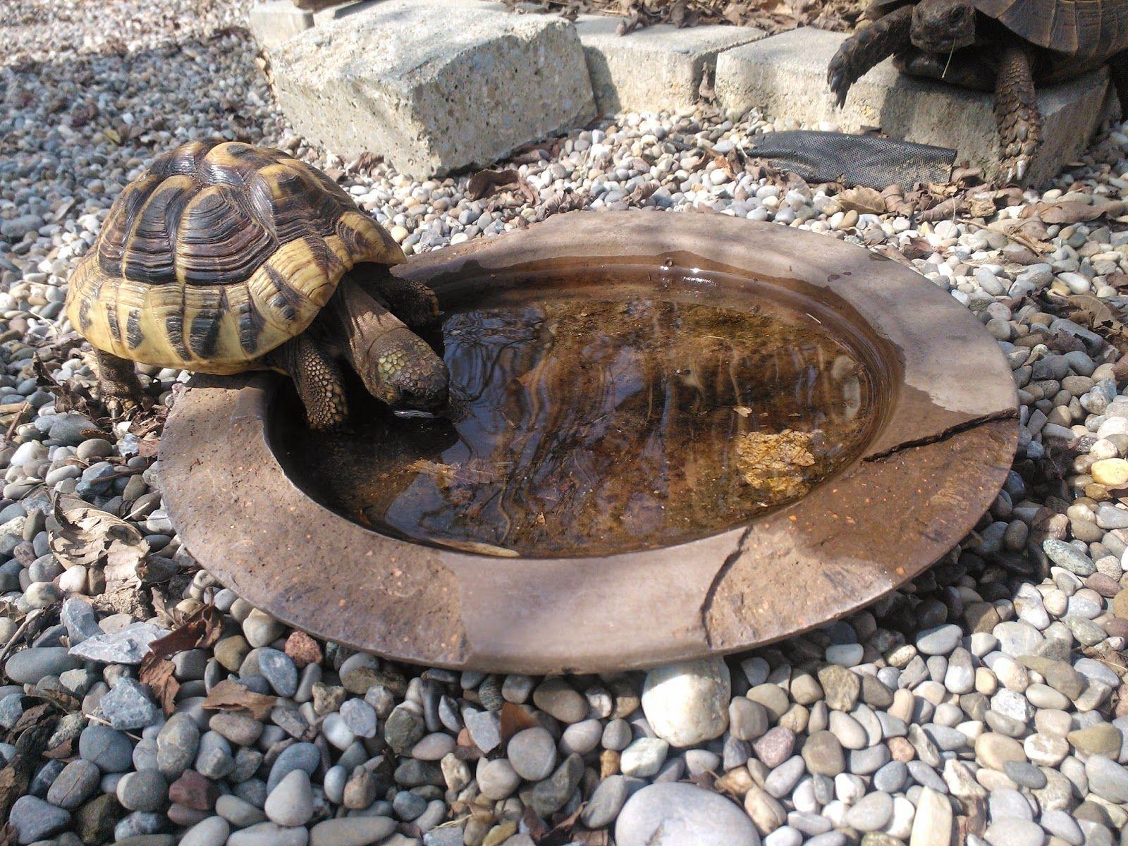 Blogevent puppy pinterest tortoise turtle and tortoise enclosure