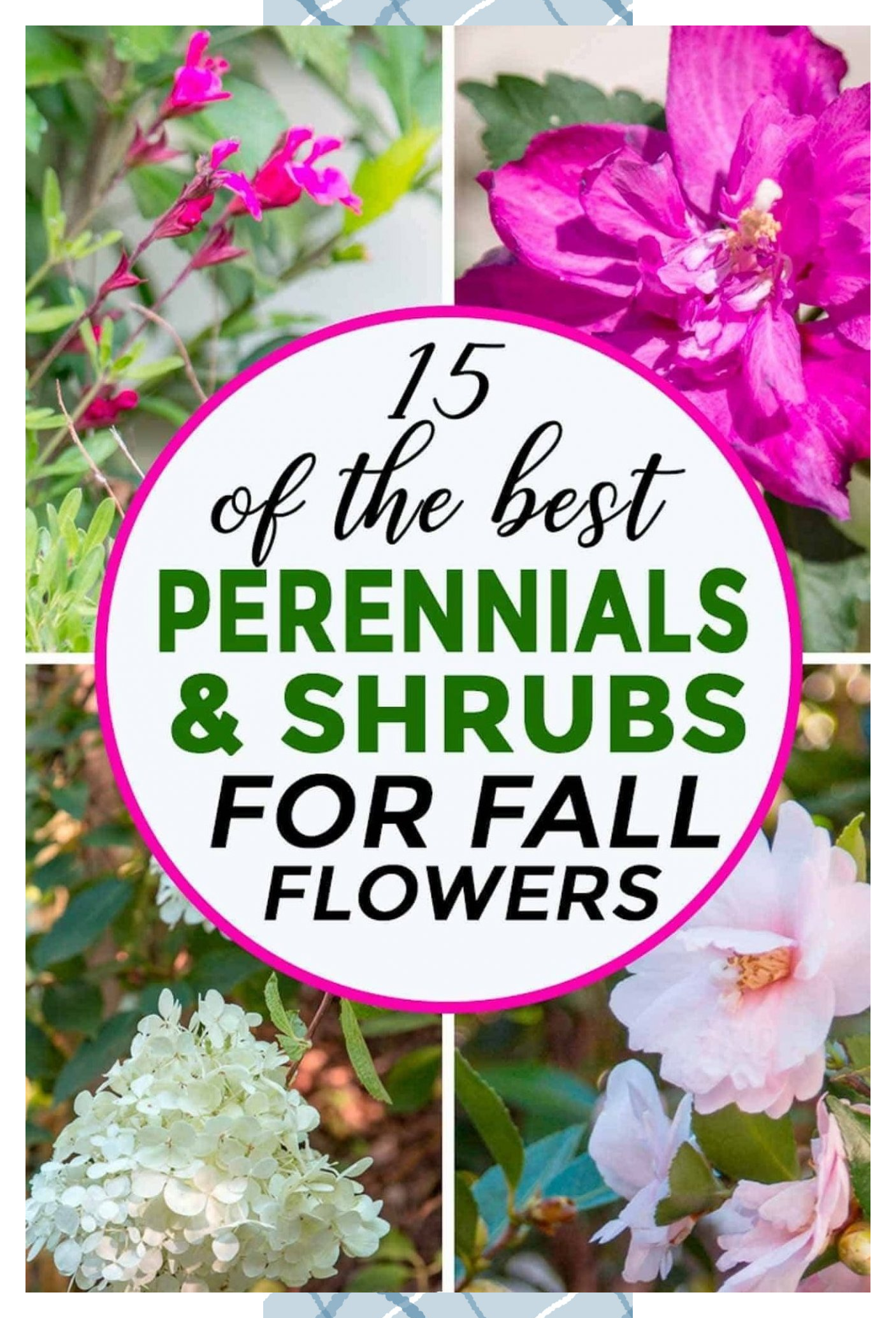 15 Of The Best Plants That Bloom In Fall Fall Flowers Fall Perennials Fall Flowers Garden