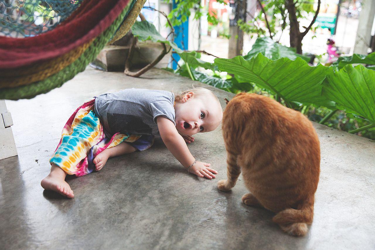 Rasta baby Rasta Cat Koh Lanta Thailand Beautiful