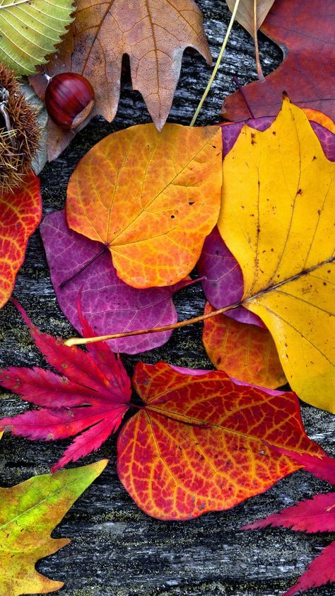 18+ Ideas Nature Wallpaper Phone Fall Leaves For 2019