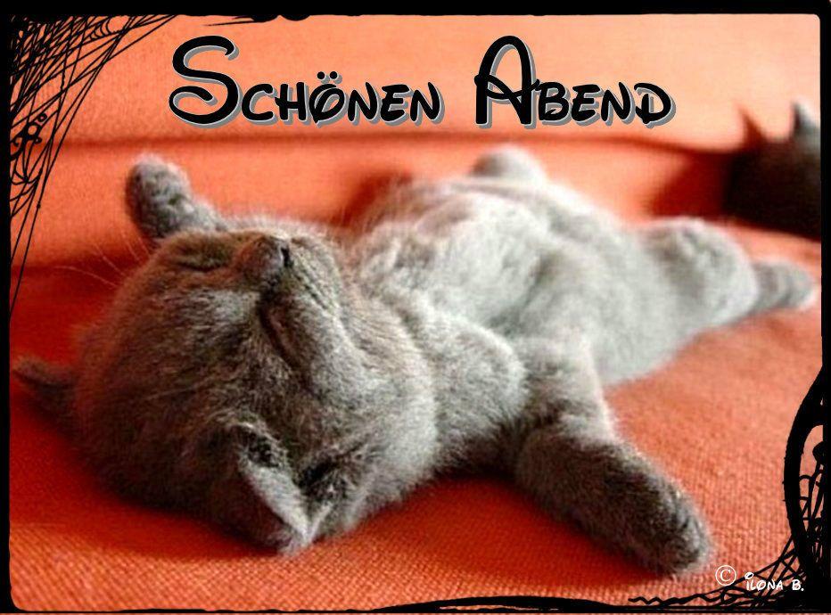 pin von eva engelhardt auf sch nen abend pinterest katzen schlafende katze und hunde. Black Bedroom Furniture Sets. Home Design Ideas