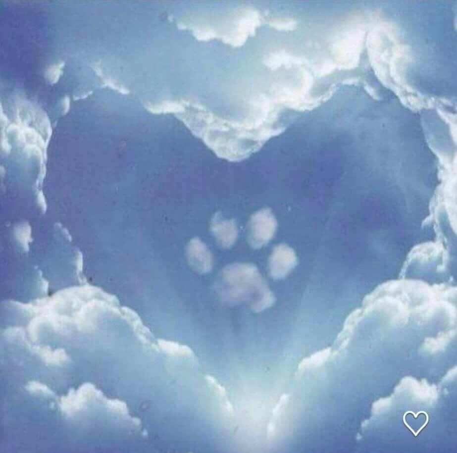 Pin by Jennifer Dodson Murphy on Puppy Love Dog heaven