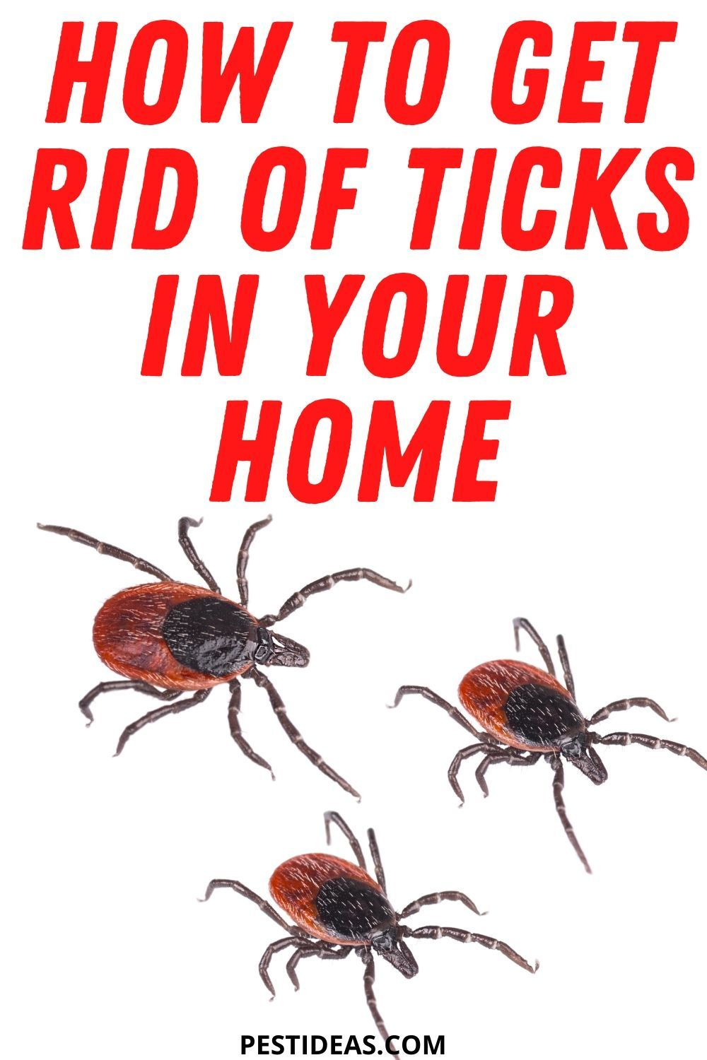 How to get rid of ticks in your home in 2020 get rid of