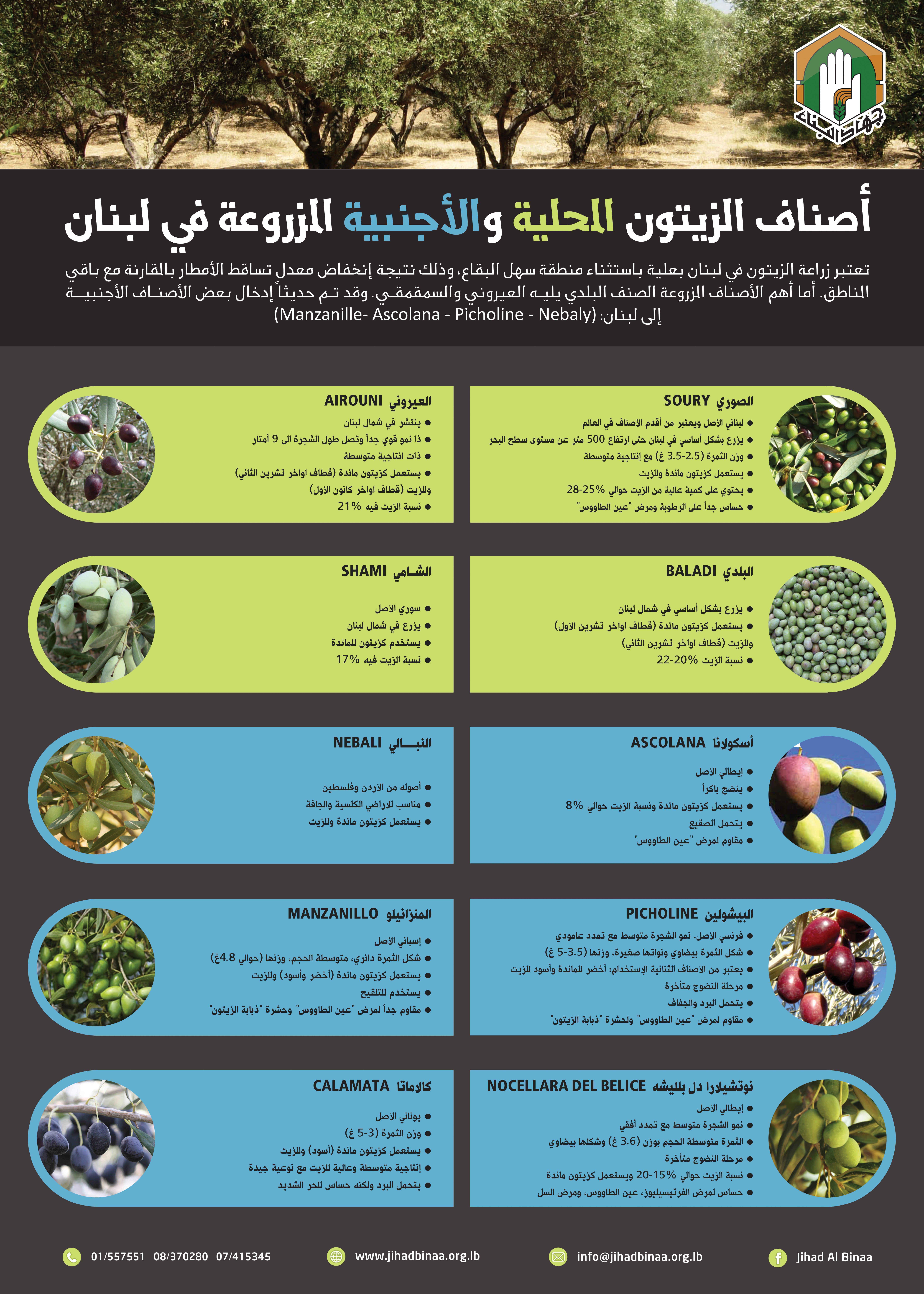 أصناف الزيتون في لبنان Tree Farms Agriculture Plants