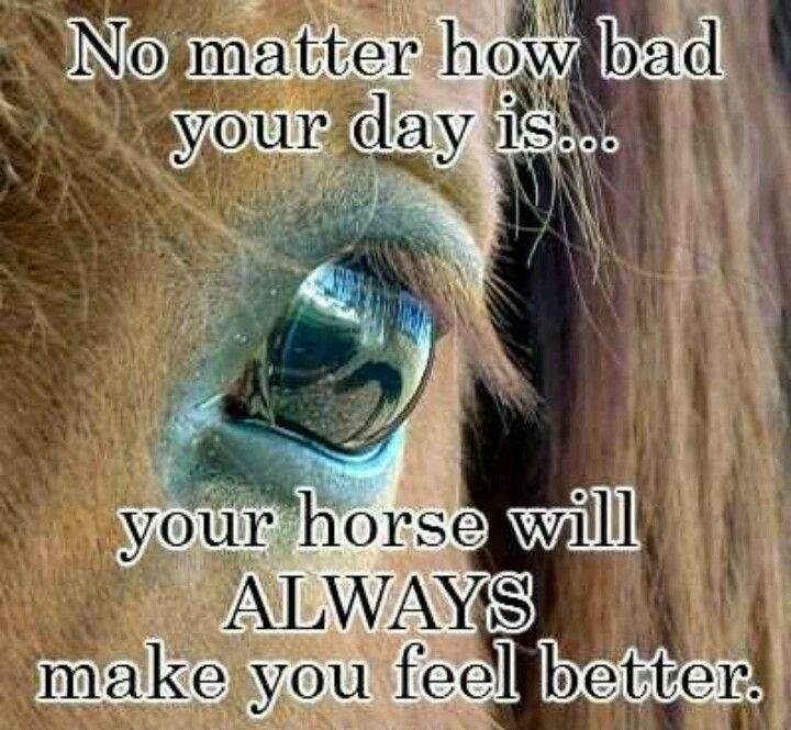 Funny Pony Quotes: Horses Make Me Happy!
