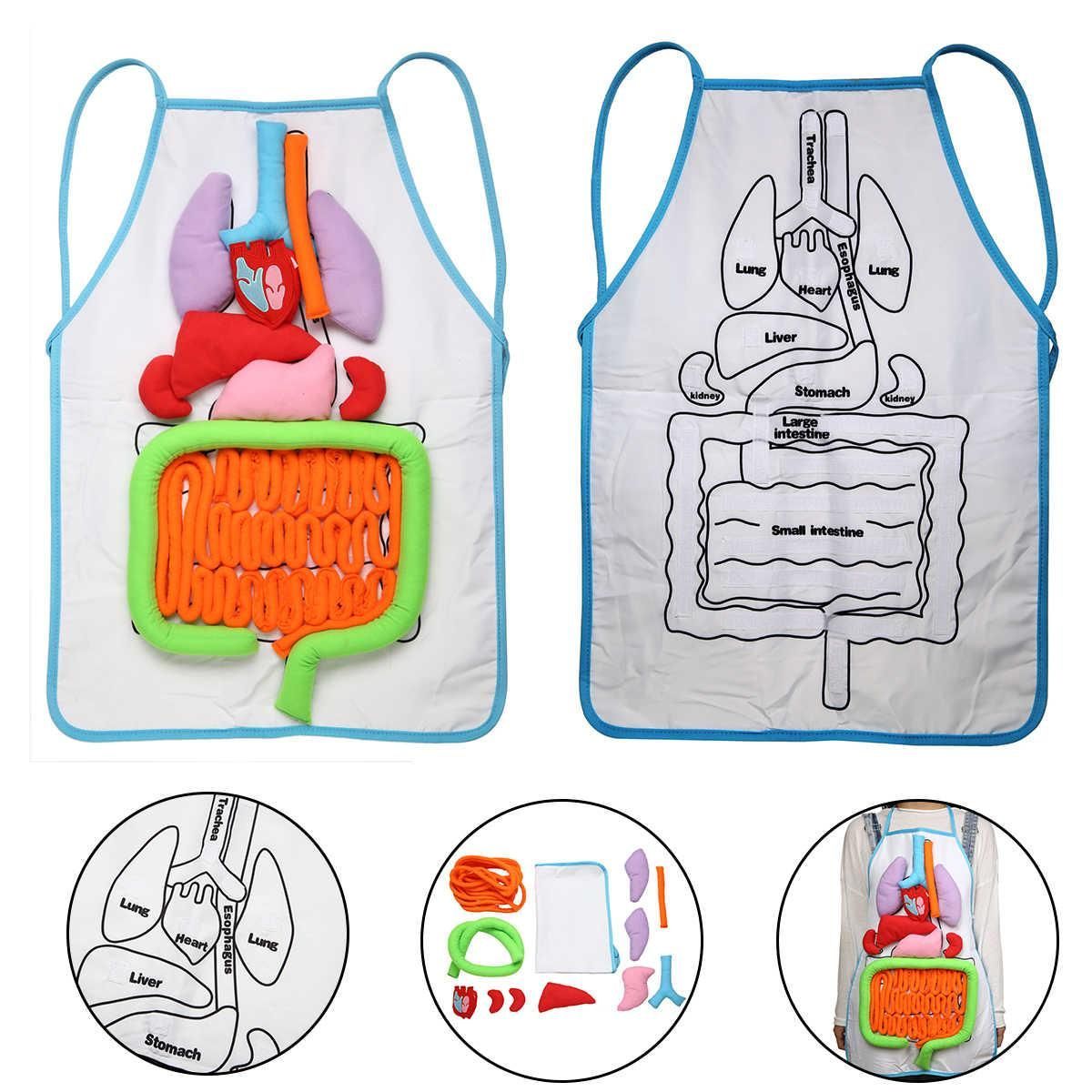 17+ Teach Your Kids Human Anatomy In A Fun Way With This TheAnatomyApron™