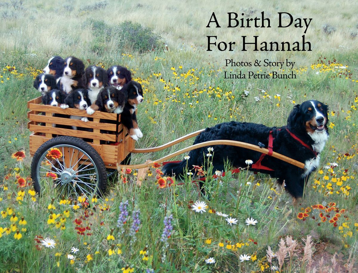 A Birth Day for Hannah - NEW BOOK!