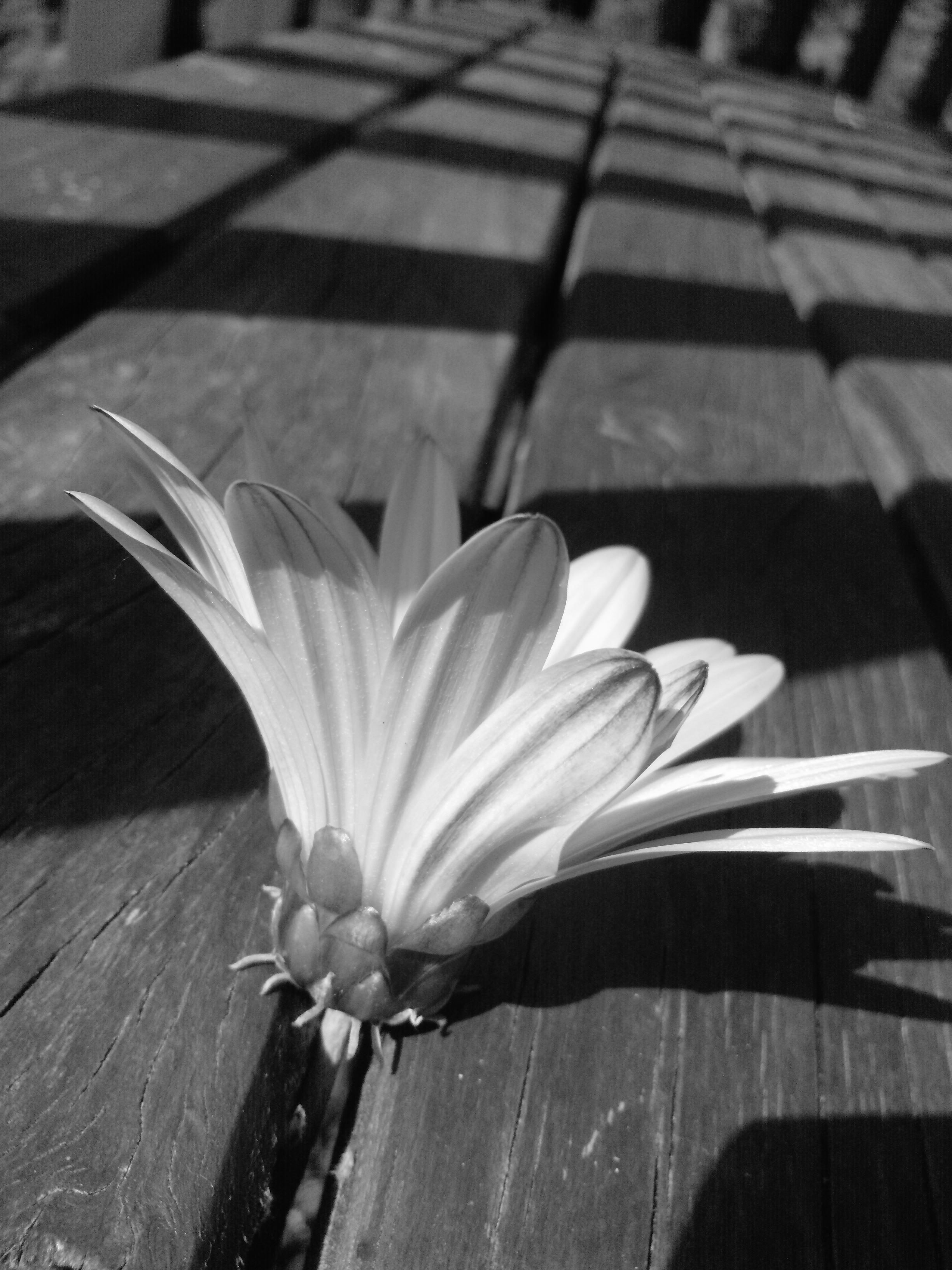 Flower and shadows Art photography, Flowers, Photography