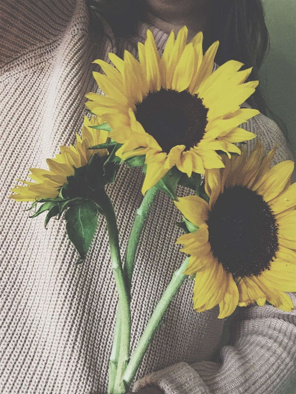 Girasoles Vintage Tumblr Pinterest Girasoles Fotos Girasoles