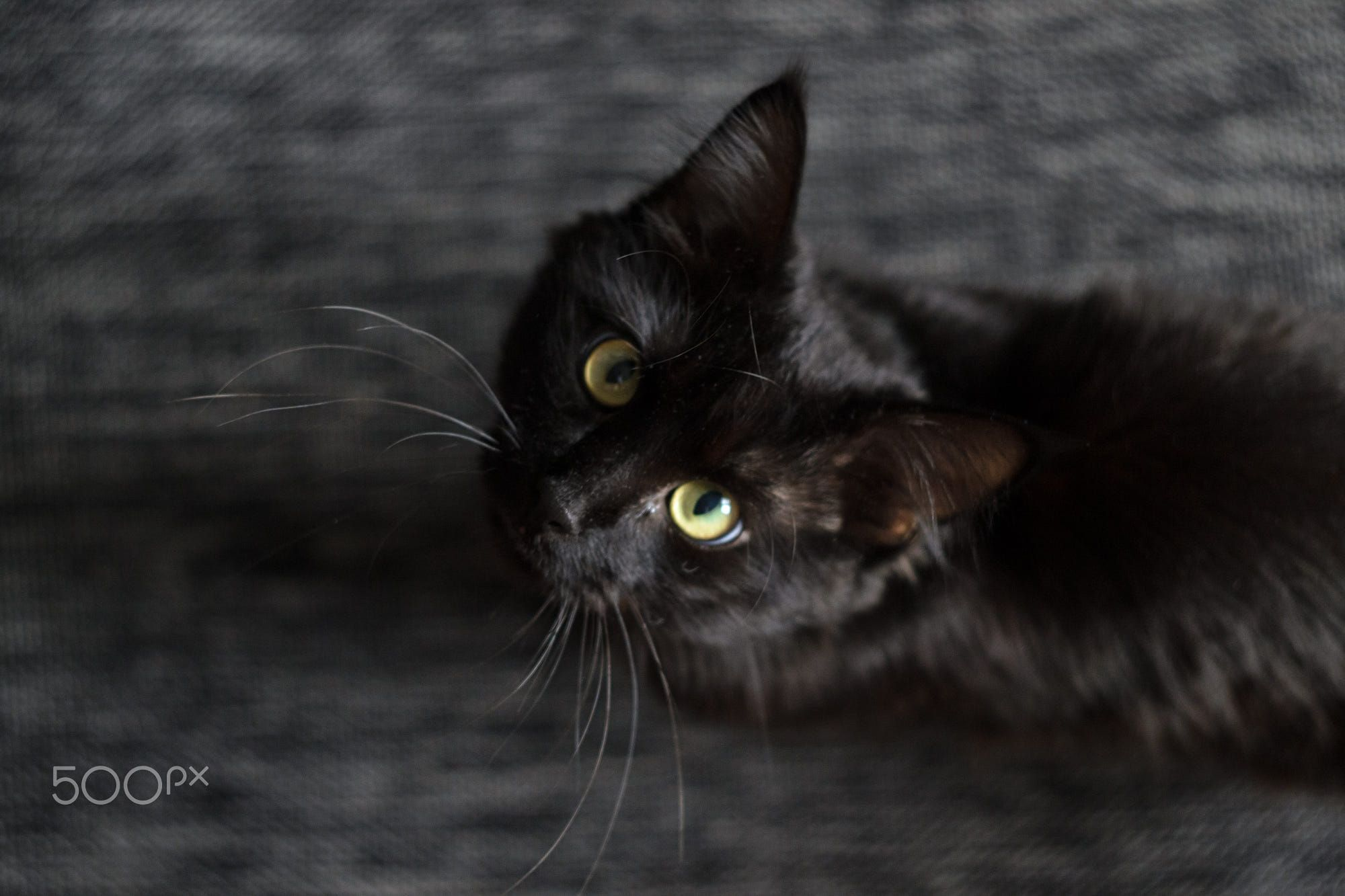 Black Cat Eyes by Aleksandr Black cat eyes, Animal