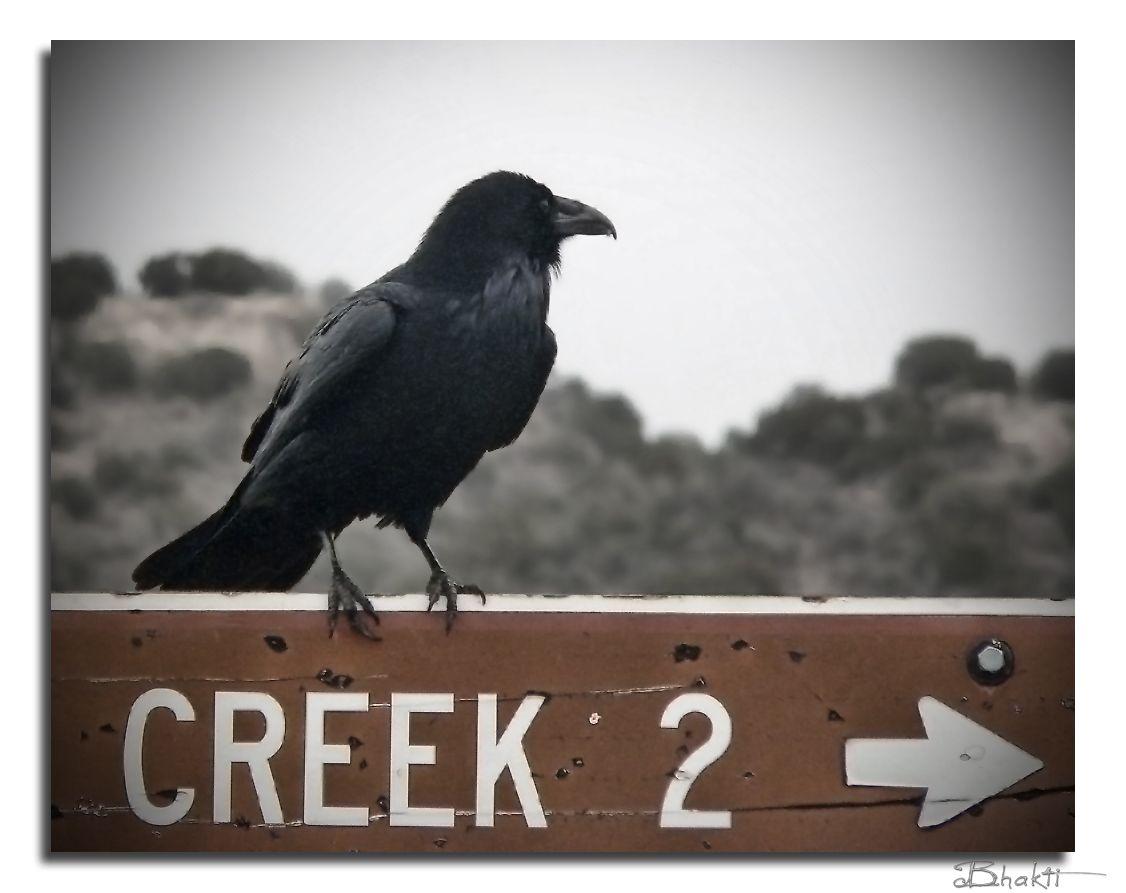 Oak Creek, Sedona, Az - Photo credit - Bee Iyata
