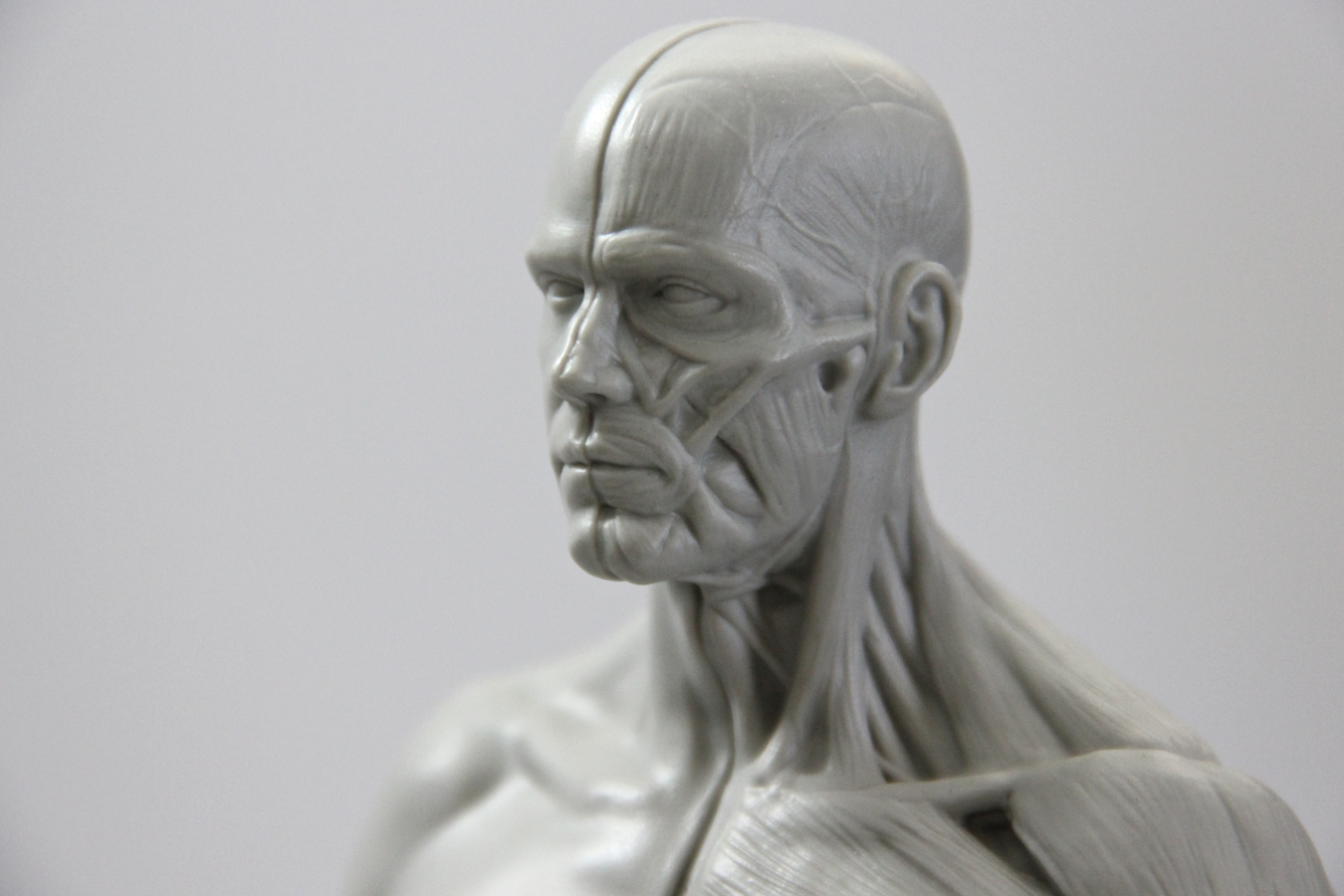 Review 3d Total Male Anatomy Figure Blender Cookie Sculpture