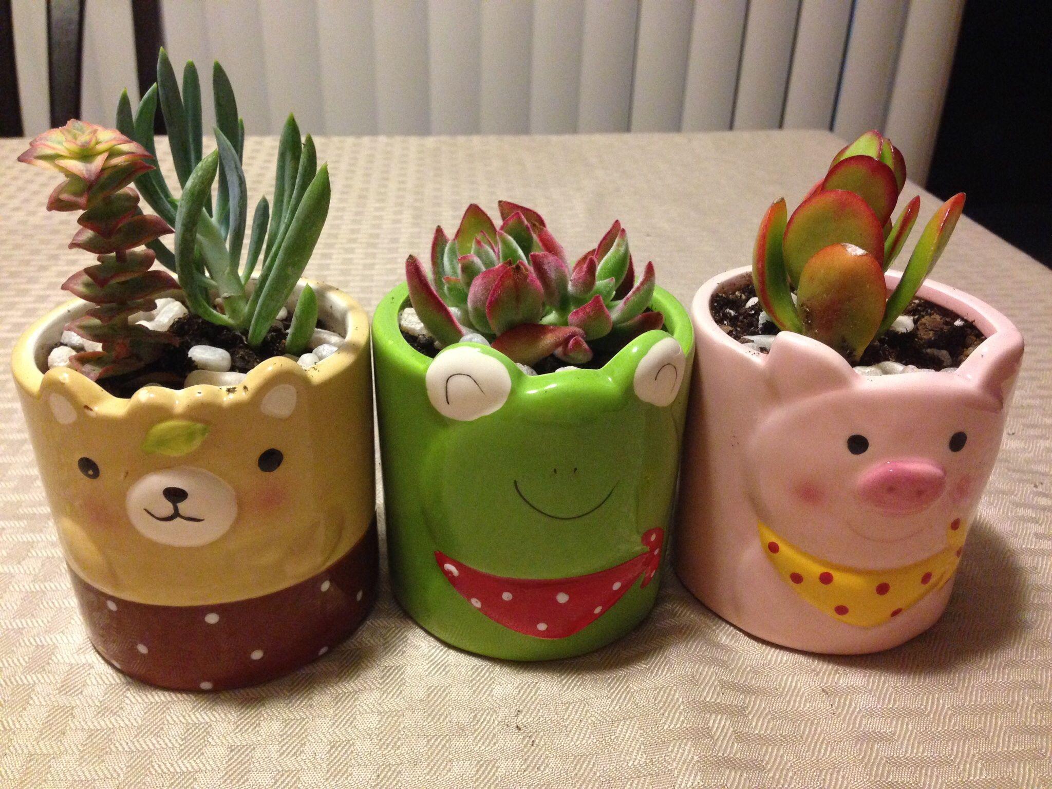 Cute Pots Fr Daiso