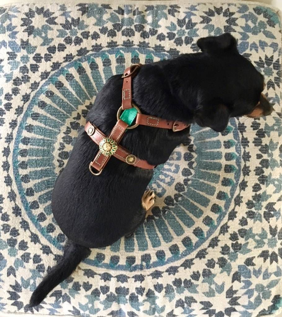 Boho Leather Dog Harness Dog Harness Sleeping Dogs Dog Care