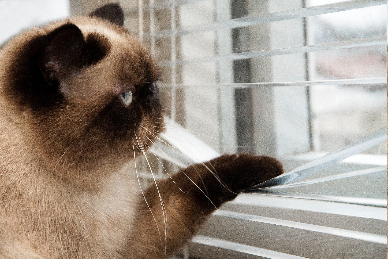 Cat Animals Grumpy Cat Wallpapers Hd Desktop And Mobile Backgrounds Cat Wallpaper Grumpy Cat Cats