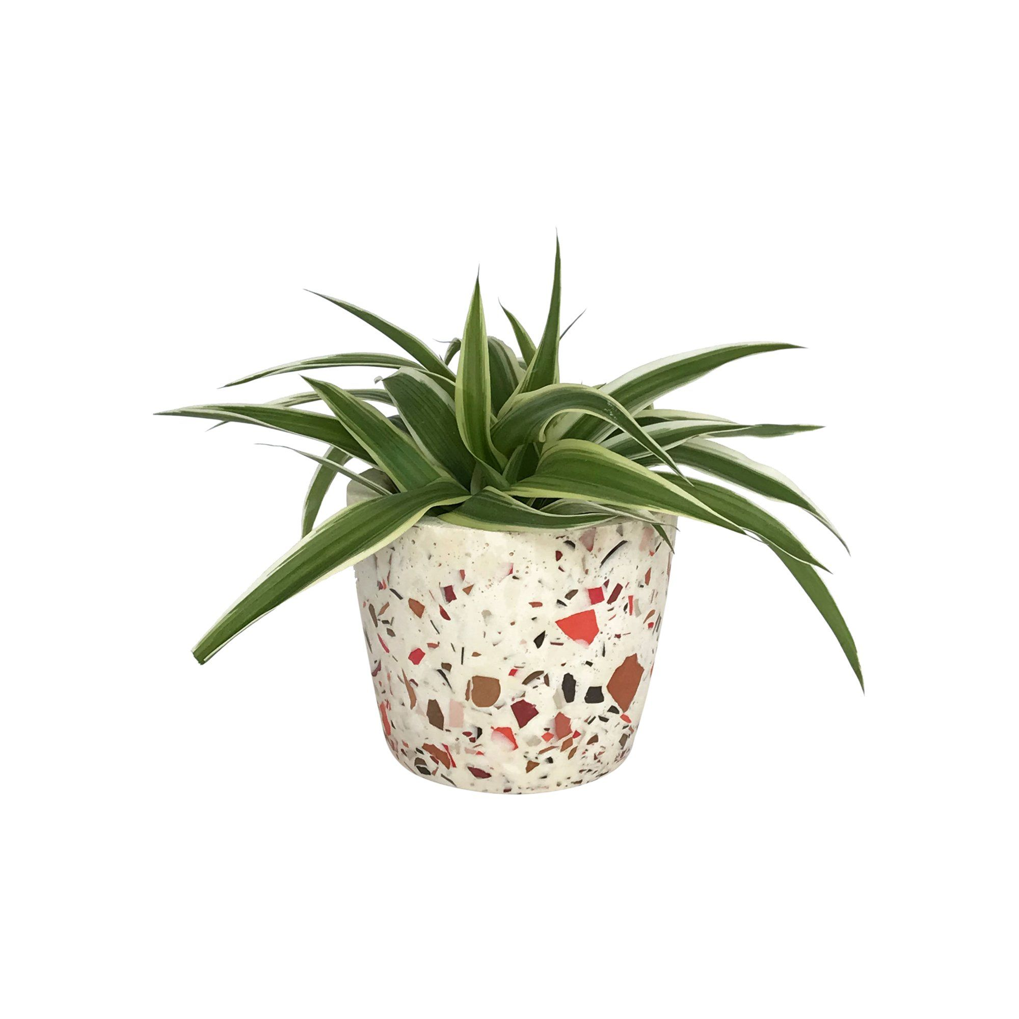 Add a splash of color to your inside or outside spaces with this Mini Cone Terrazzo Planter. Waterproof Materials: Concrete Size: 2.75